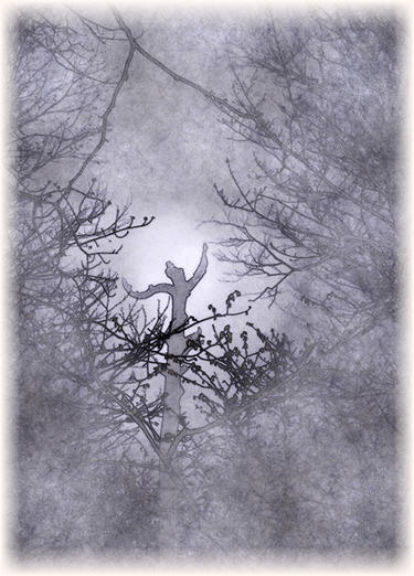 treedancer2.jpg