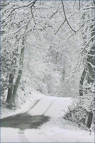 The soft still silence of snow