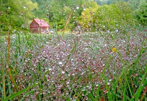 Summer pasture wet with dew