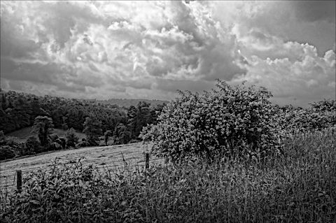 Pasture Scene: the feeling of age and time