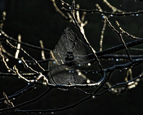 Visible web, the spider's loss, the photographer's gain