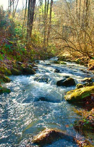 Nameless Creek in a season of plenty