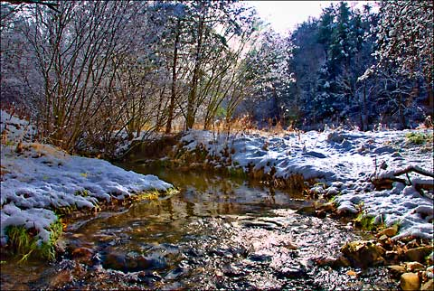 A Well-Watered Winter