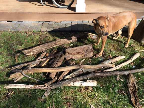 A dog's work is never done: Gandy's Workshop