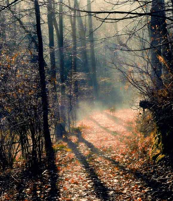 Foggy Winter Morning Walk