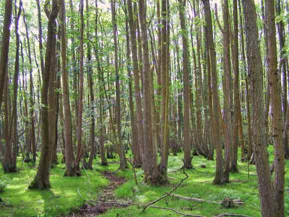 Bing creative commons image of coppice woods