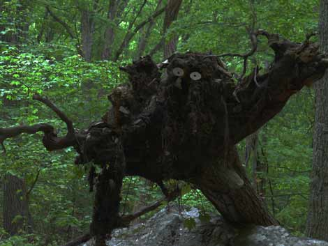Trail Root Monster