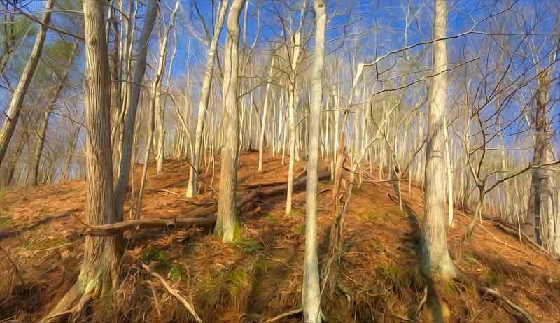 forest ridge in morning sun